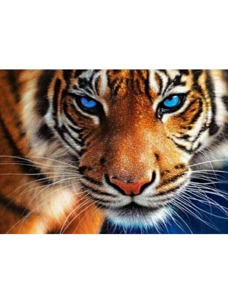 Алмазная вышивка Голубоглазый тигр на подрамнике,  20цв, 30х40см