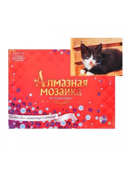 Алмазная мозаика 30 × 40 см, полное заполнение, с подрамником «Чёрно-белый котёнок»