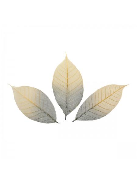 Скелетированные листочки из каучукового дерева, 2-цветный серебряный