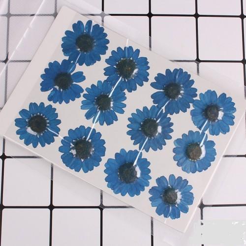 Сухоцветы,ромашки синие
