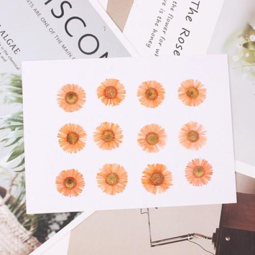 Сухоцветы,маргаритки оранжевые.